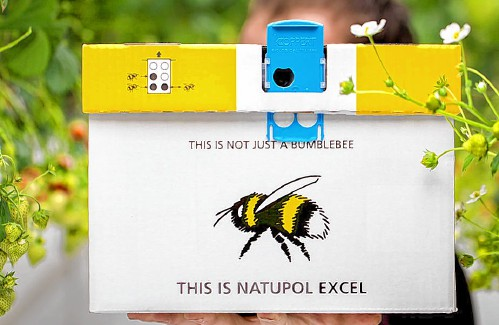 You can order everything else online so why not a box of bumblebees ?