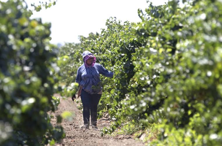 Farmworker unions win battle
