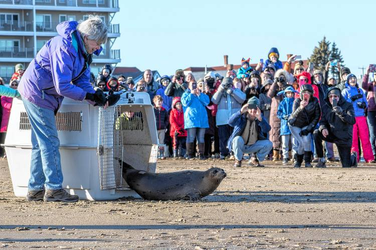 New Hampshire marine team releases seal from center