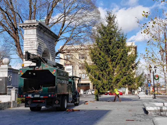 City's Christmas tree now standing tall