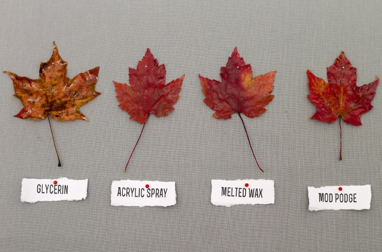 Capture The Colors Of Fall Leaves