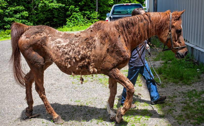 Chichester Farm Takes In Four Rescued Horses From Deering