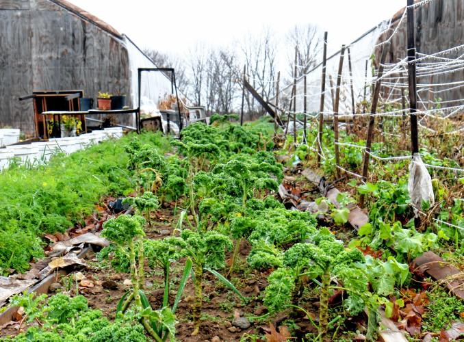 Stone Garden Farms Fresh start farms program helps refugees find community workwithnaturefo