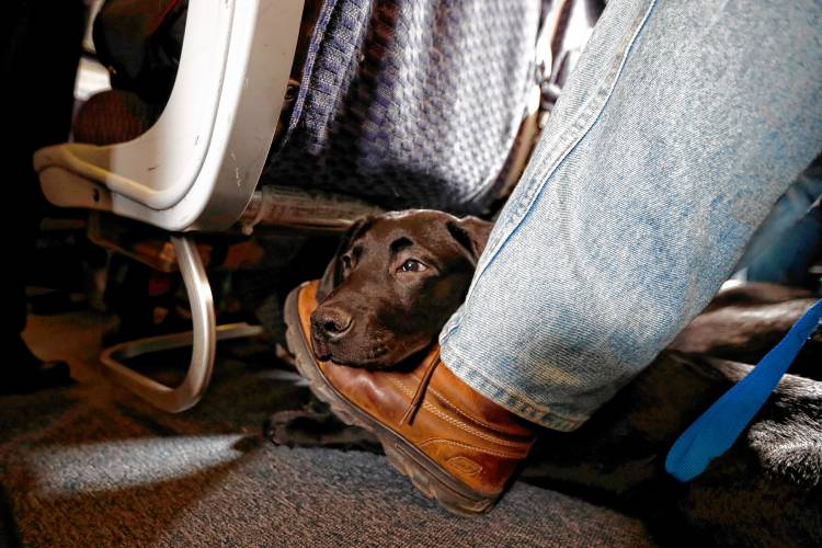 United Updates Policy on Support Animals, But Not Service Animals