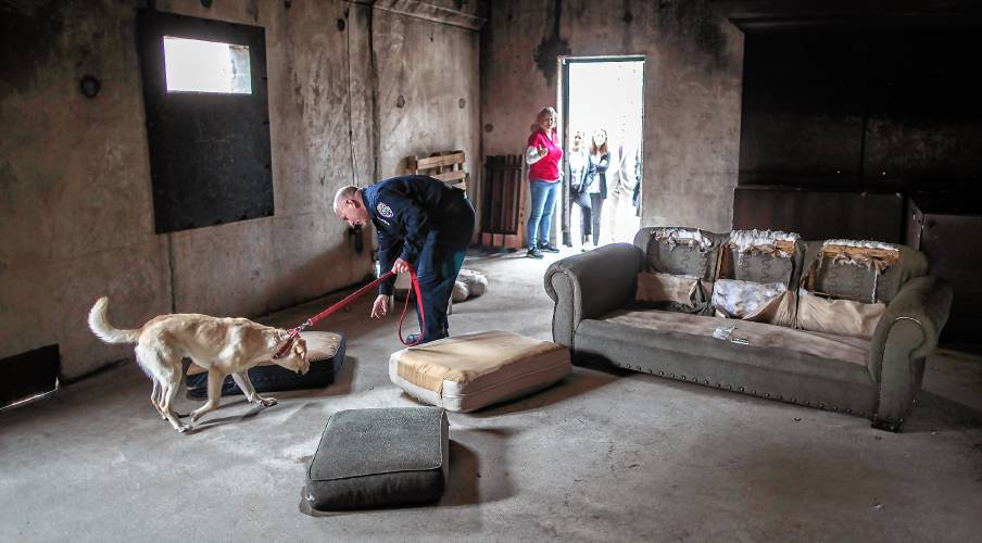 Following the scent: Investigator, yellow Lab team up to get