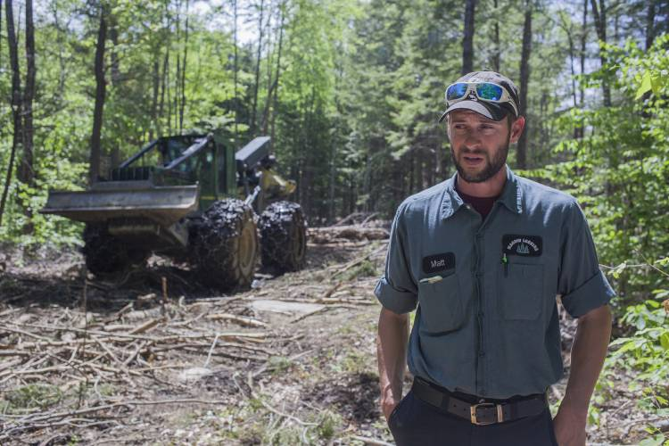 N H  loggers struggle as low-grade wood loses its value