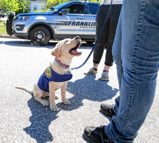Franklin Police's new comfort dog sworn in