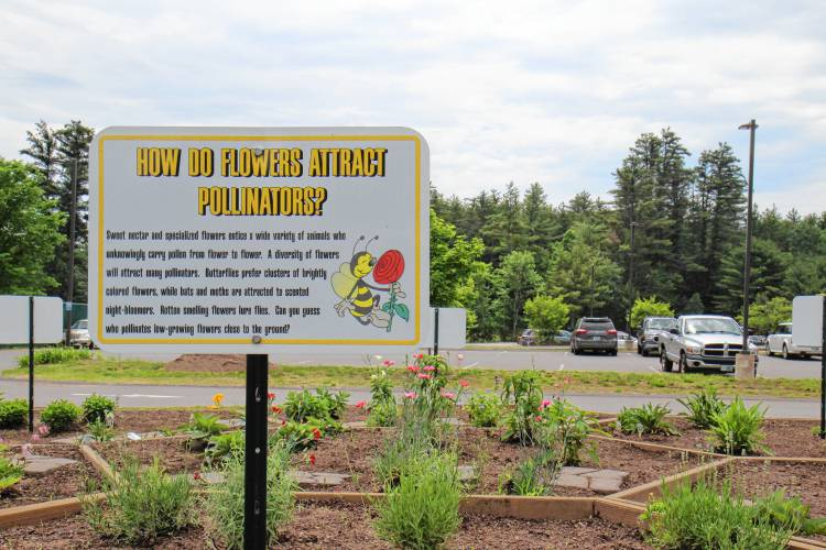 Loudon Elementary School\'s pollinator garden a hive of activity