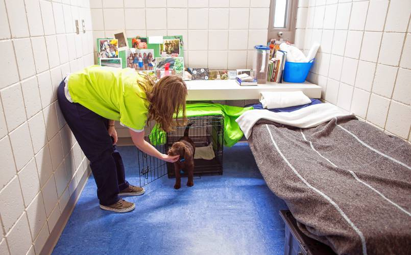 Puppies behind bars inmates train future service dogs through