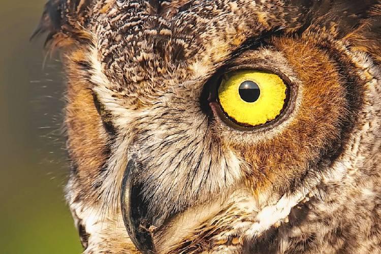 News Owl