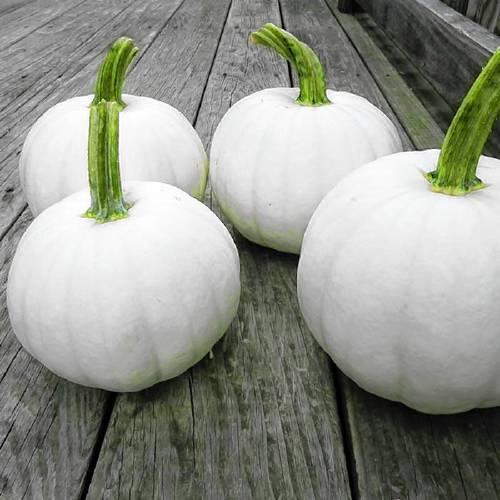 Little Bing Hybrid Tomato, New Items: Vermont Bean Seed