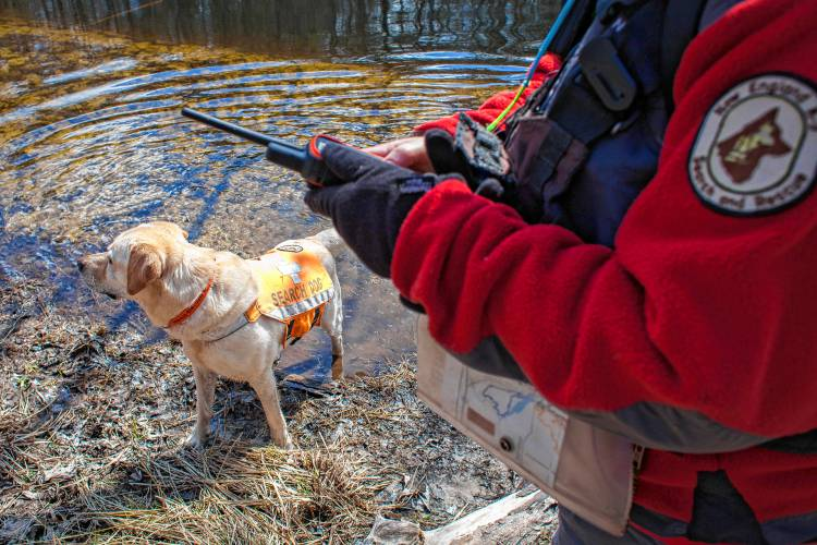 In Concord Search And Rescue Dogs Train To Sniff People Out In The