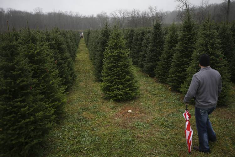Christmas tree farms expecting strong season from pent up families