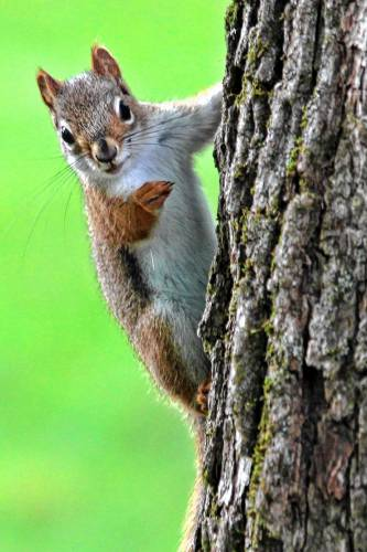 from fruit thieves to road kill squirrels are everywhere this summer