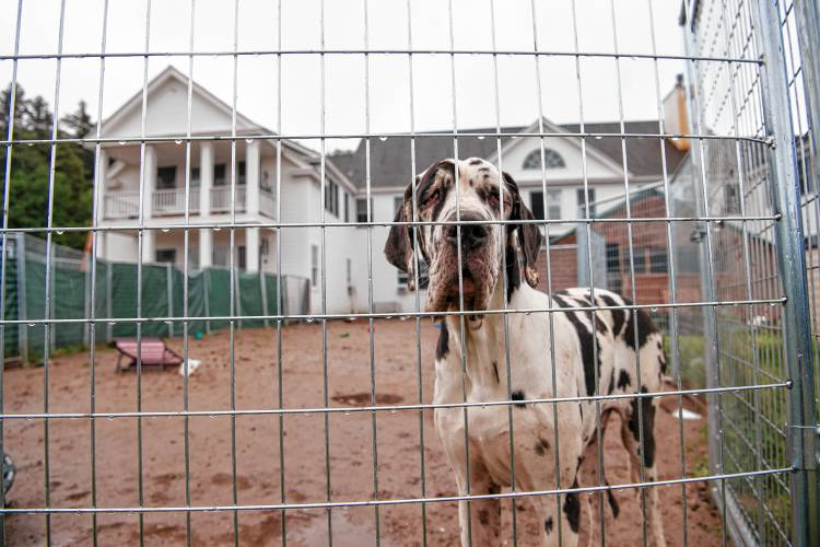 Twelve new animal cruelty charges brought in neglected Great