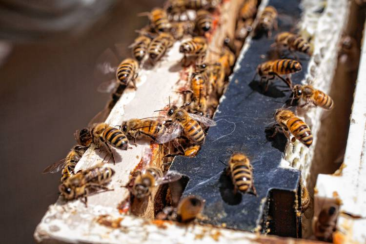 Raising Honeybees Without Chemicals Livestock Supplies 2018 Second Edition