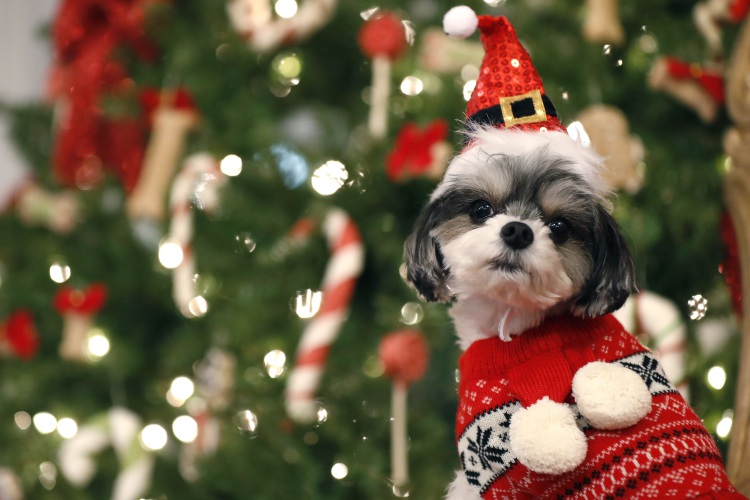 Petsmart Christmas Hours.Guide To Presents For Pets